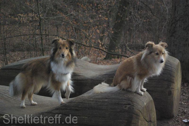 04.03.2012: Duvenstedt