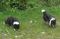 06.05.2012: Himmelmoor