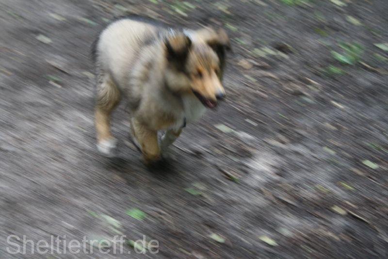 17.06.2012: Duvenstedt